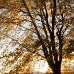 Verliebe dich – Die schönsten Date Ideen im Herbst!